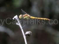 The forest #dragonfly